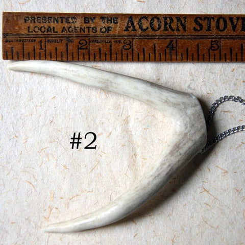 Extra Large Forked Deer Antler Tip Necklace with Vintage Stainless Steel Chain