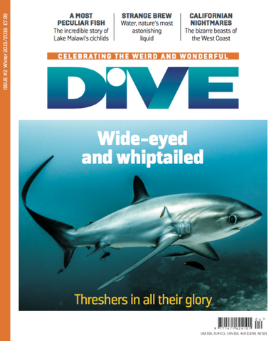 DIVE Winter 2016