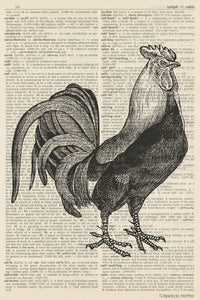 Chicken Illustration (dictionary background) Poster