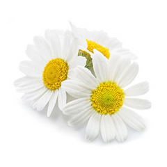 Chamomilla Flower flower extract soothes irritated scalps.