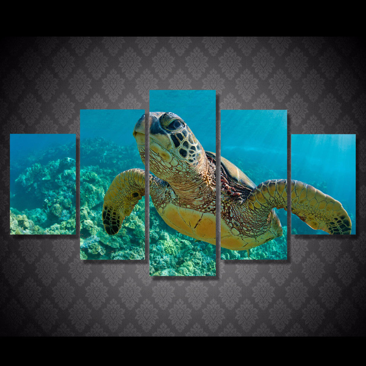 Turtle Exquisite 5 Piece Canvas