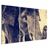 Elephant Trunk 3 Piece Canvas