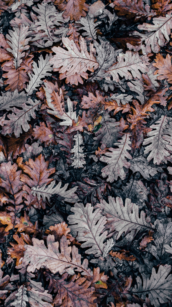 Leaves Wallpaper for iPhone