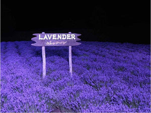 200 PCS / bag french provence lavender seeds very fragrant organic lavender seeds plant flower Flower seeds Home Garden Bonsai