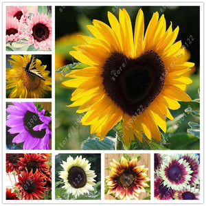 40 pcs/bag sunflower seeds,sunflower seeds for planting,bonsai flower seeds,10 colours,Natural growth for home garden planting