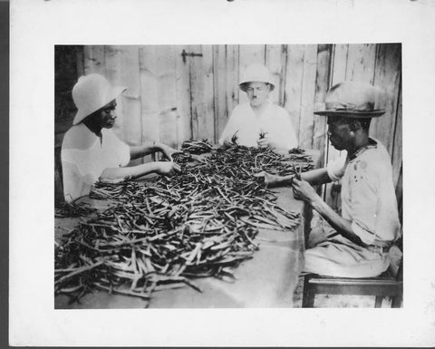 sorting vanilla beans, fair trade vanilla