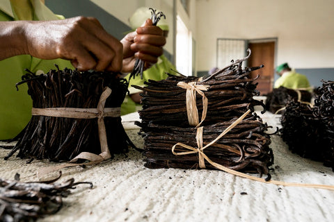 sorting vanilla beans for market
