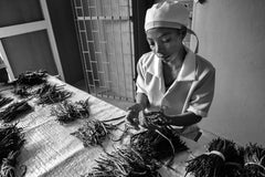 vanilla bean sorting, a delicate job done by the Madagascar women