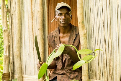 Madagascar vanilla bean farmer watching over his crop