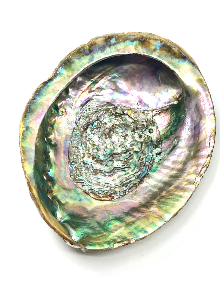 Abalone Shell for Smudging - Large Inspired By 3 Australia