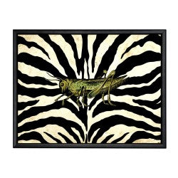 Grasshopper on Zebra Background Picture