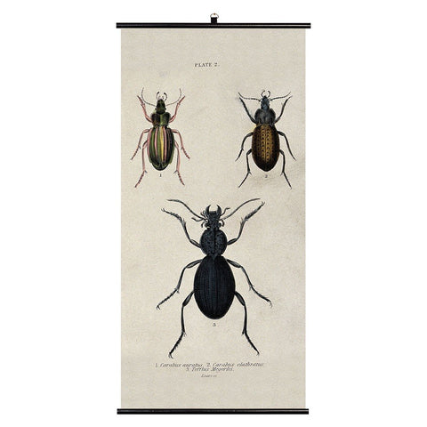 Beetles Biologica Wall Chart