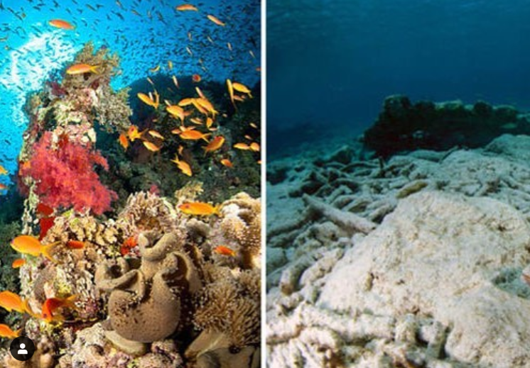 50 Minutes to Save the World - @savethereef
