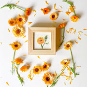 Calendula Painting + Essence