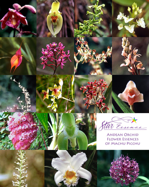 andean orchid flower essences of machu picchu star essence