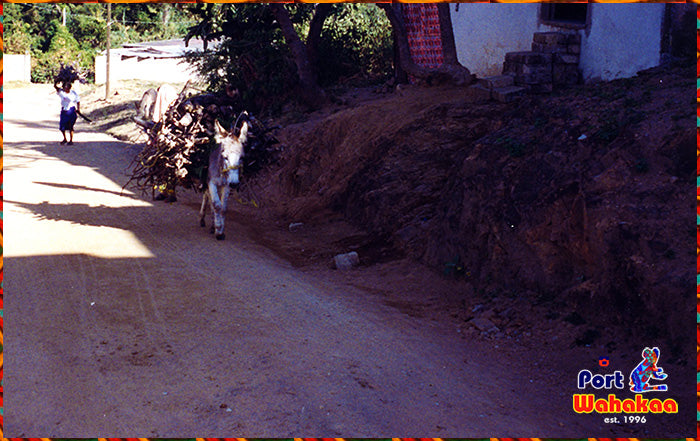 Burro Carrying Copal Wood To Village