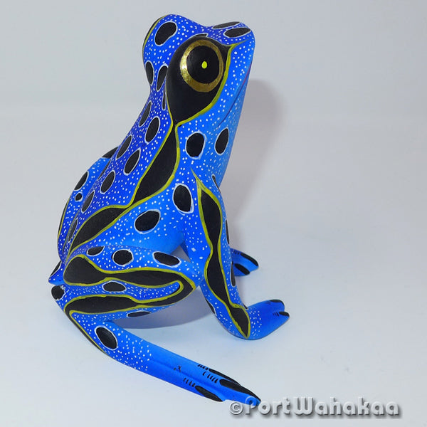 Blue Mist Rainforest Frog - Port Wahakaa