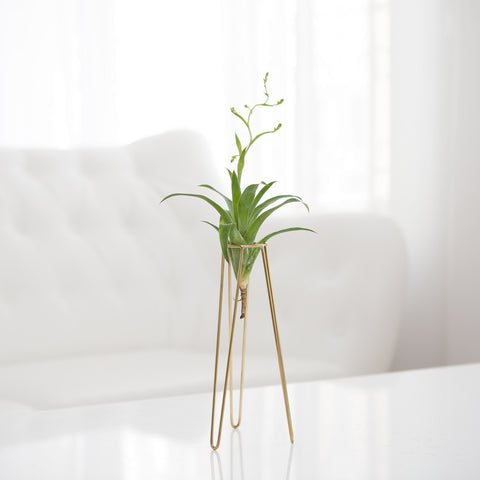 Arkiplant - Table Tower L