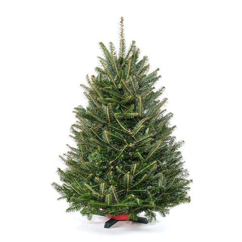 Real Christmas Trees Delivered | Fresh Cut Fraser Fir Christmas ...
