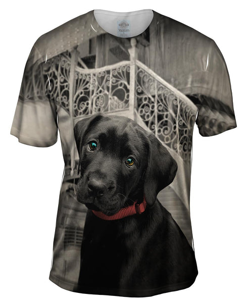 Black Lab Puppy Mens T-Shirt