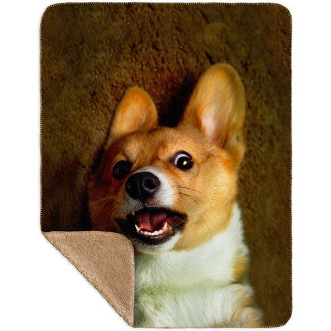 OMG Welsh Corgi