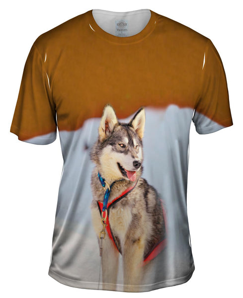 Sledding Husky Mens T-Shirt