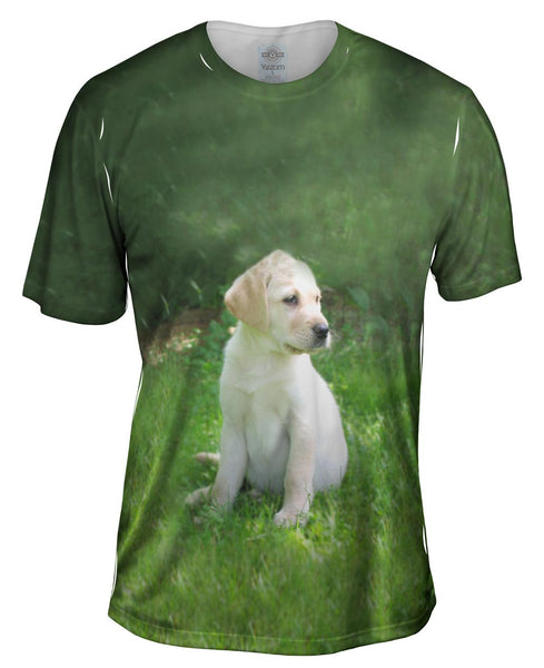 Young Golden Lab Mens T-Shirt