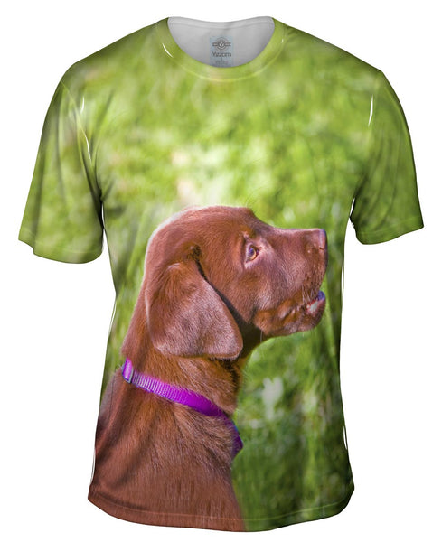 Young Chocolate Lab Mens T-Shirt