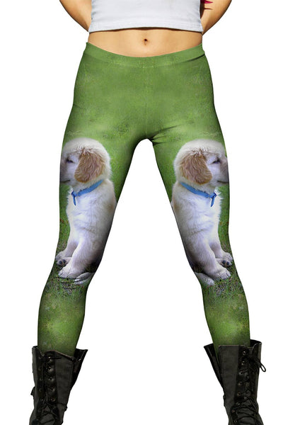 Golden Lab Puppy In Thought Womens Leggings