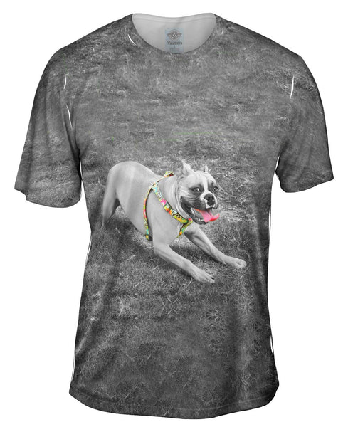 Boxer With Colorful Harness Mens T-Shirt