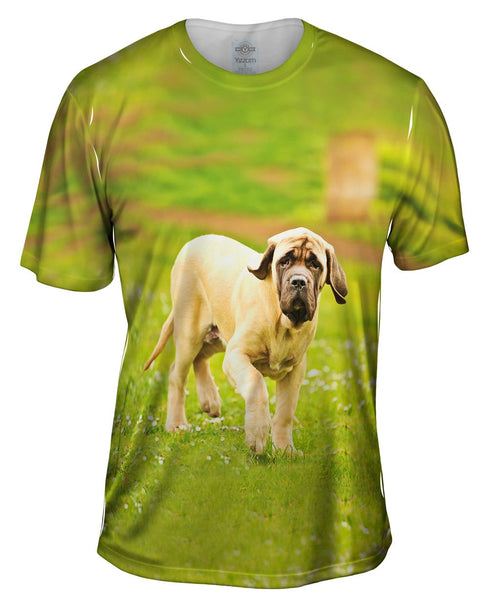 Courageous Mastiff Mens T-Shirt