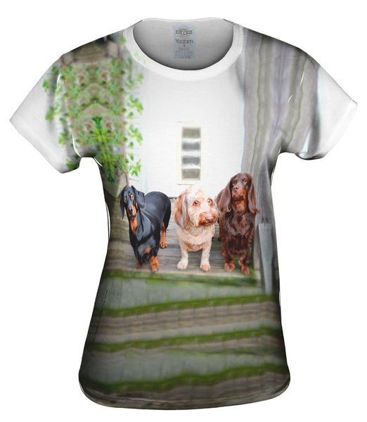 Dachshund Variety Pack Womens Top