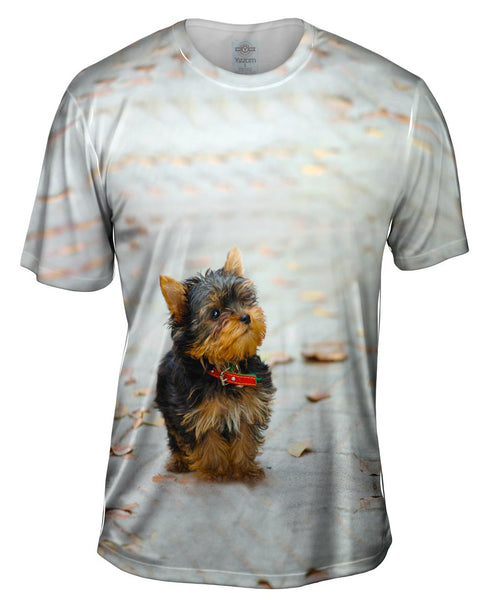 Curious Yorkie Puppy Mens T-Shirt