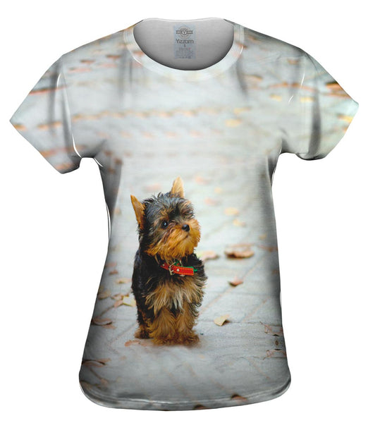 Curious Yorkie Puppy Womens Top