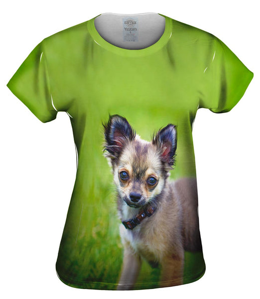Longhaired Chihuahua Womens Top