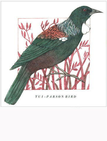 Birds of the Doubtful Valley - Tūī