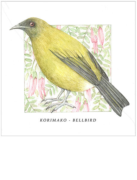 Birds of the Doubtful Valley - Bellbird or korimako