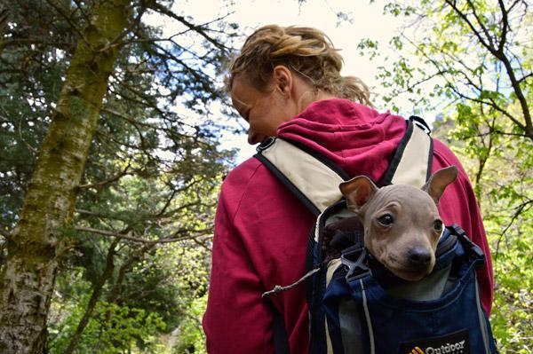 Tips for the Great Outdoors with your Dog