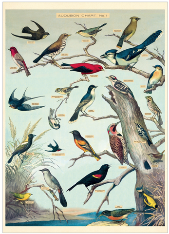 Audubon Birds Wrap