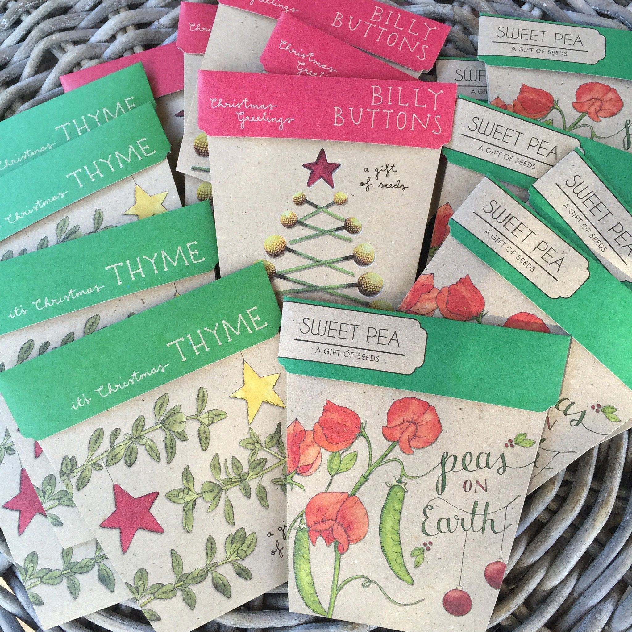 Christmas Billy Button Gift of Seed Cards