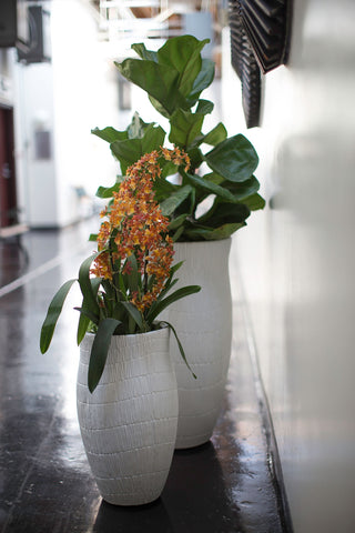 White Wai Planter