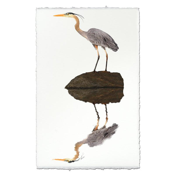 Great Blue Heron Print on Fine Paper