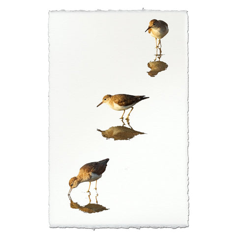 Three Sandpipers  Print on Fine Paper