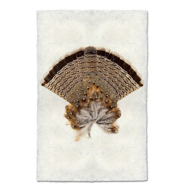 Ruffed Grouse Tail