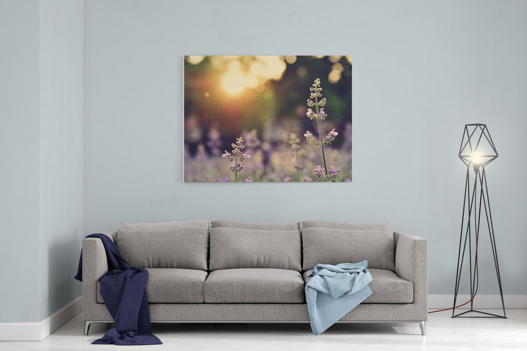 A Field Of Lavender Flowers During Sunset In New York City Canvas Wall Art Print