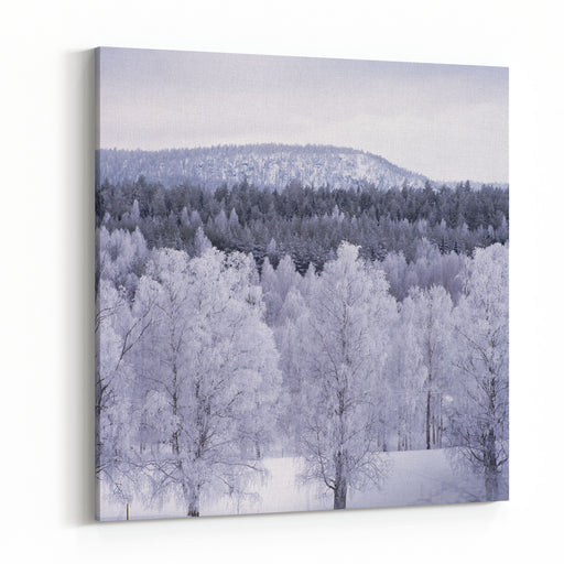 Snowclad Trees By Mountain Canvas Wall Art Print