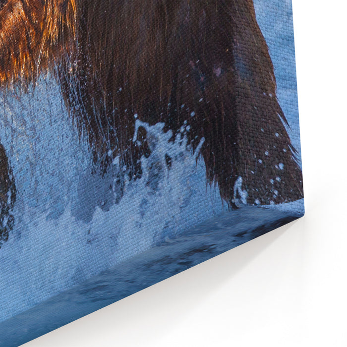 Brown Bear On Alaska Canvas Wall Art Print