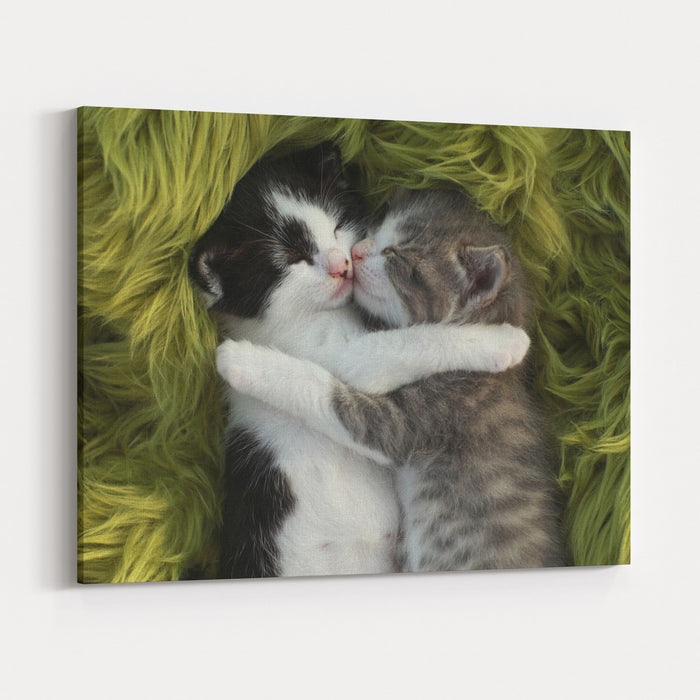 Cute Little Kittens Outdoors In Natural Light Canvas Wall Art Print