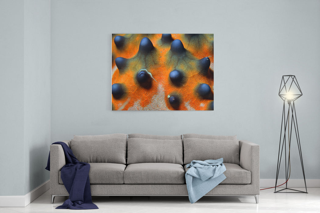 Closeup Of A Knobbly Sea StarHorned Sea Star Protoreaster Nodosus, Bunaken, Indonesia Canvas Wall Art Print