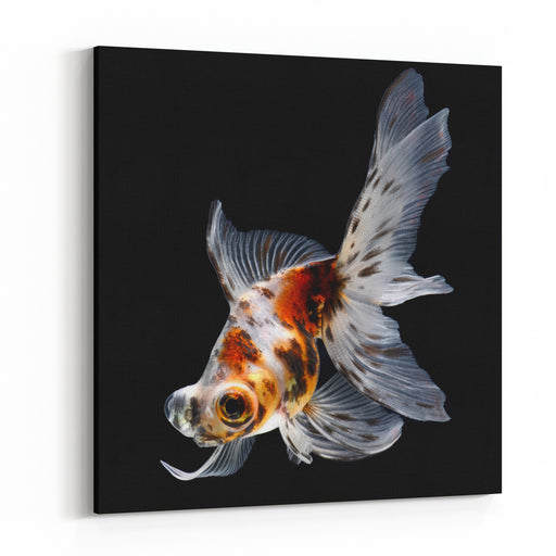 Goldfish Isolated On Black Background Canvas Wall Art Print